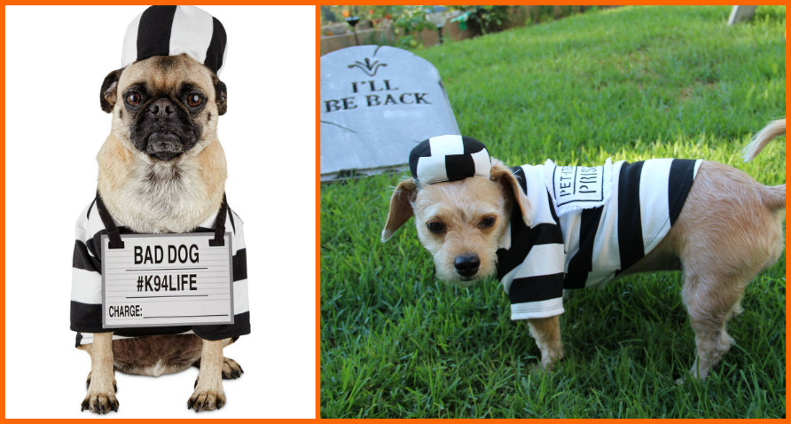 Petco halloween costume story - latf usa