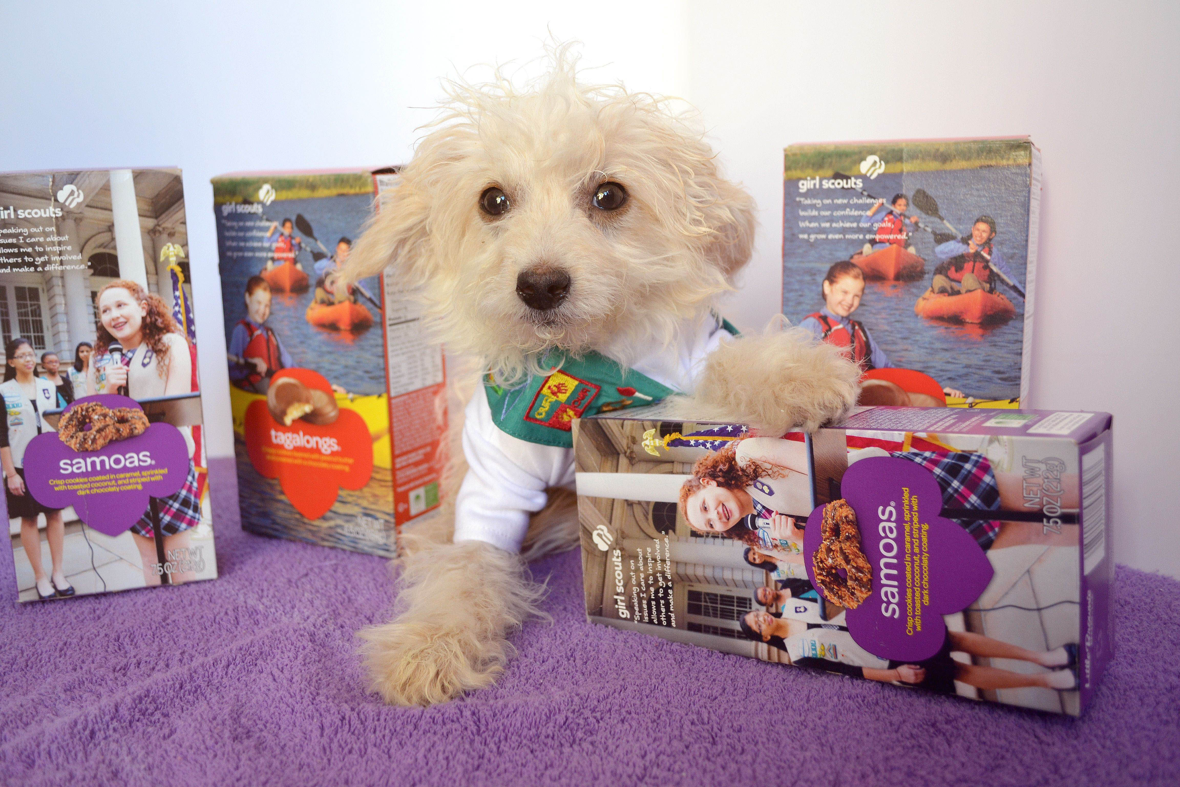 girl scout cookies puppies