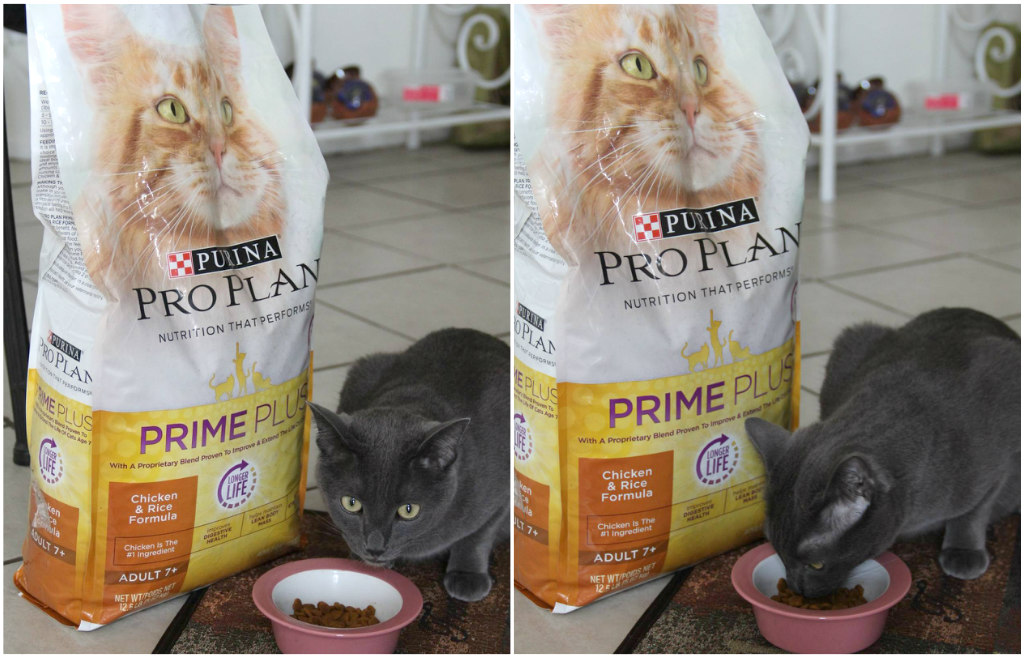 Purina pro prime plus food for cats