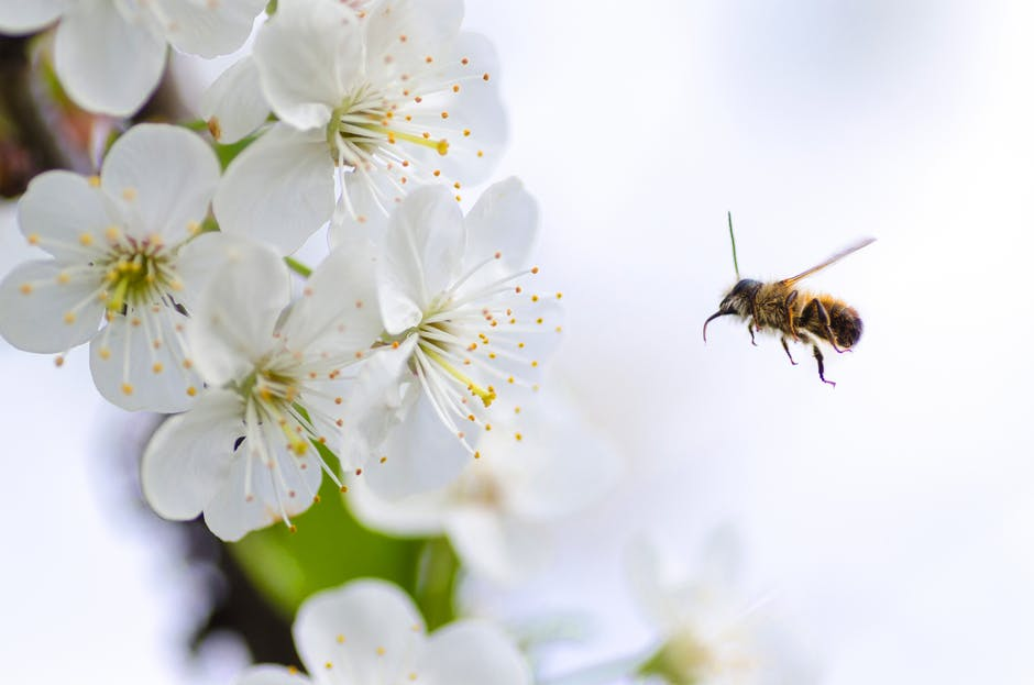 ortho, how to protect honeybee pollinators