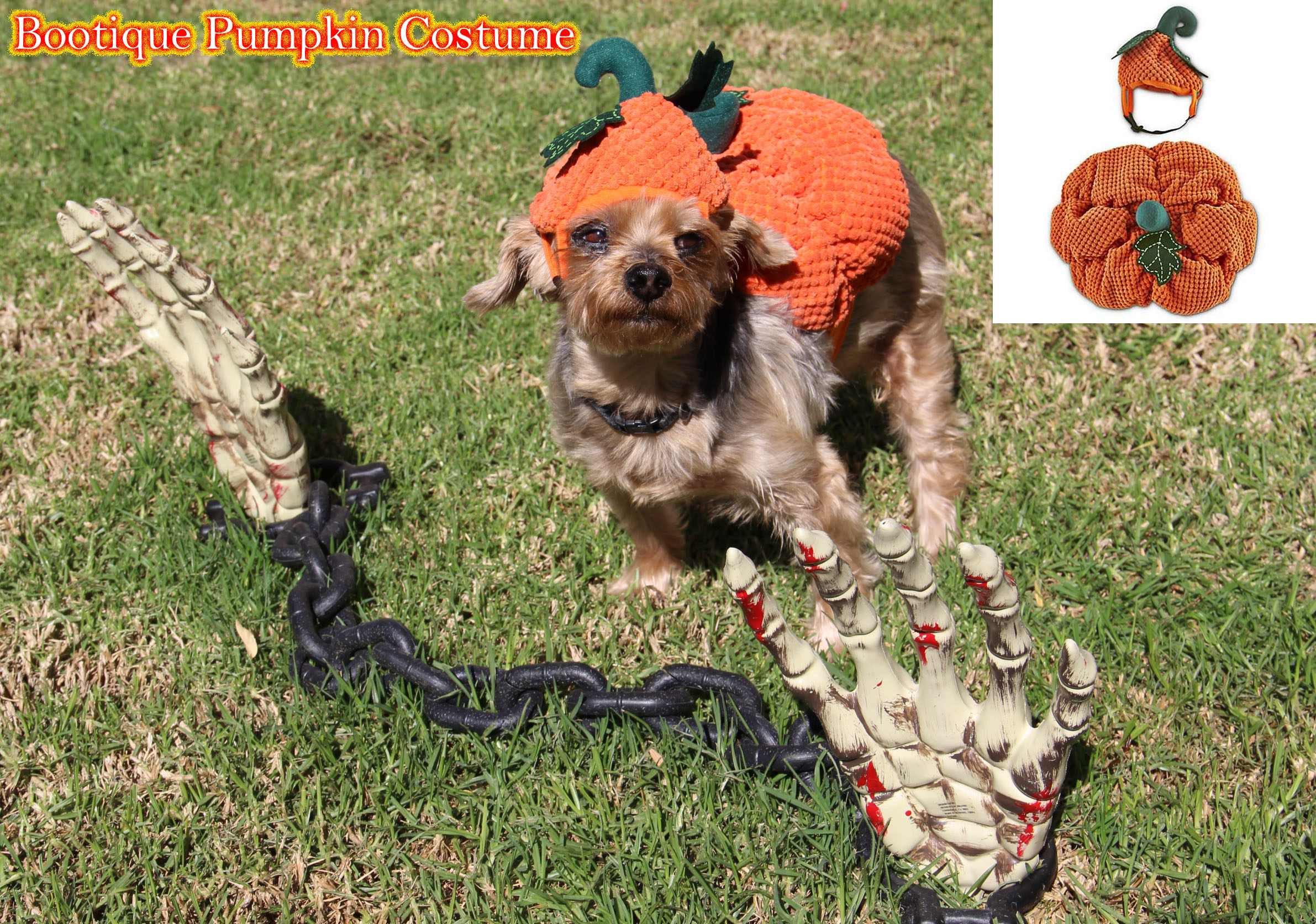 petco, dog, pumpkin costume