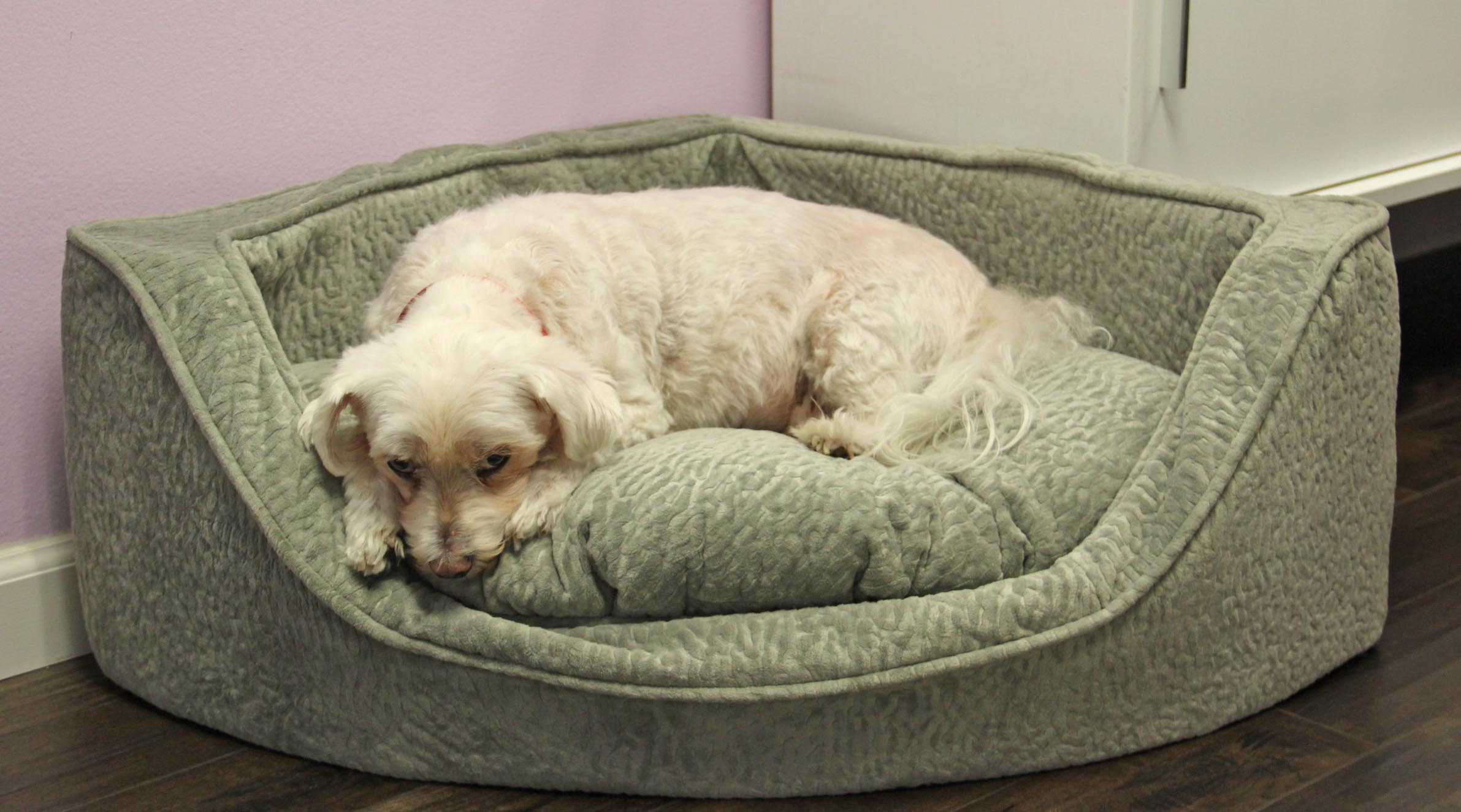 snoozer luxury dog corner bed