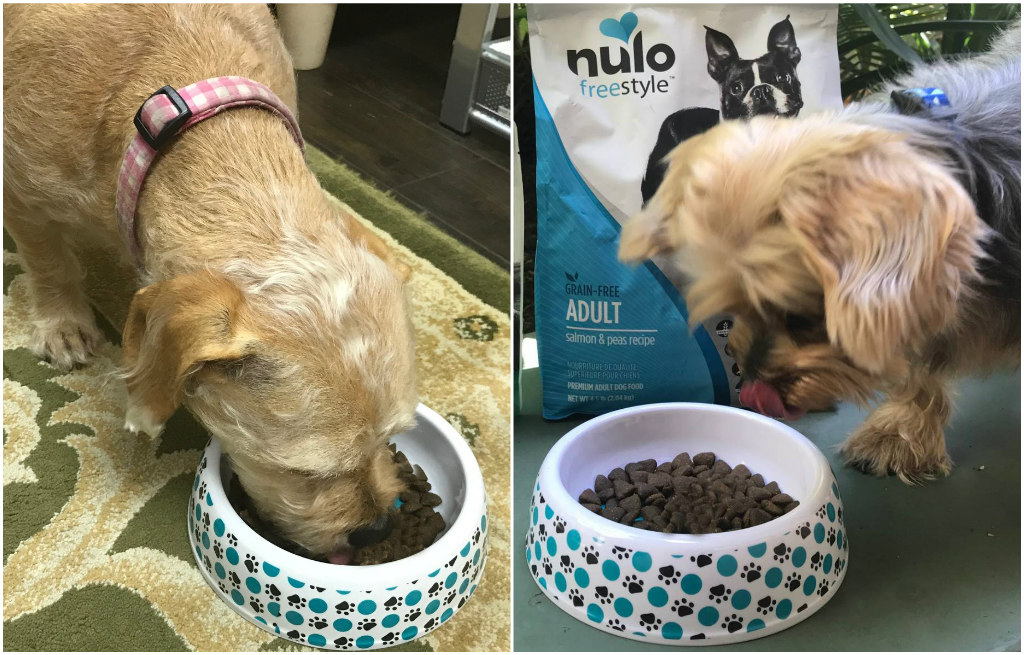 nulo pet food, laurie, elvis