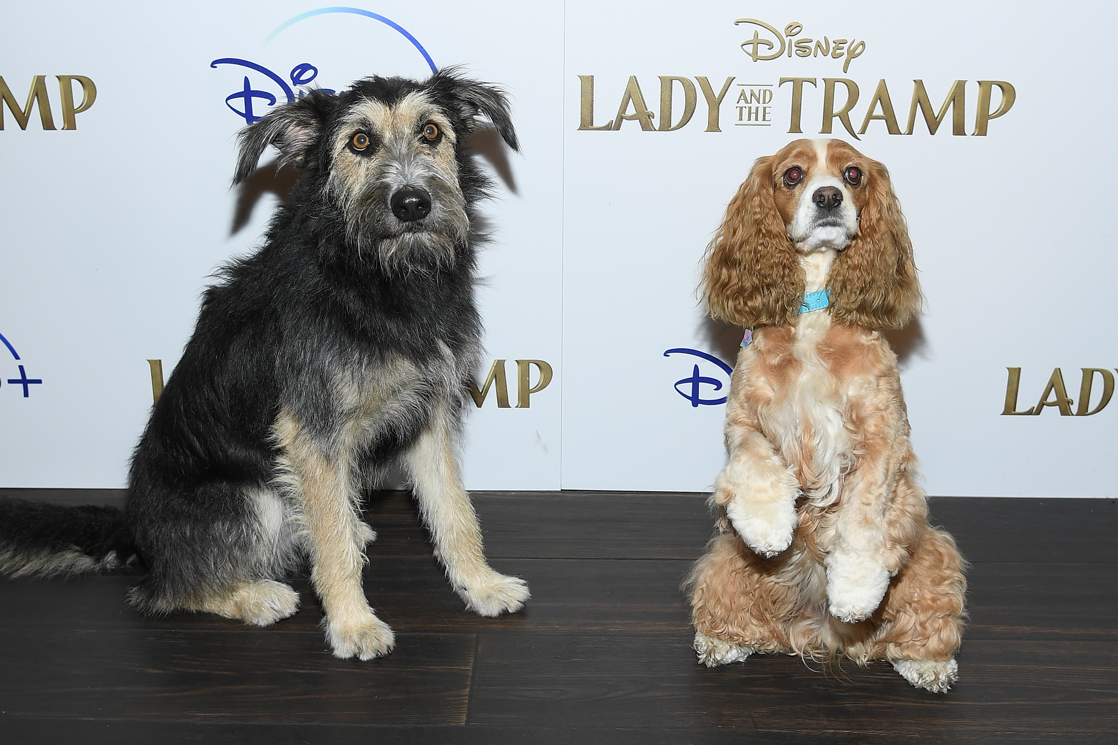 Dogs Hit The Red Carpet For Lady And The Tramp Screening Latf Usa