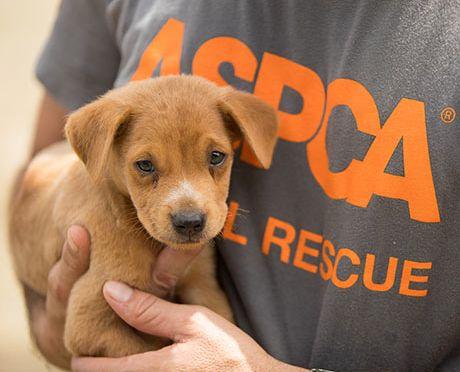 aspca, coronavirus, donate