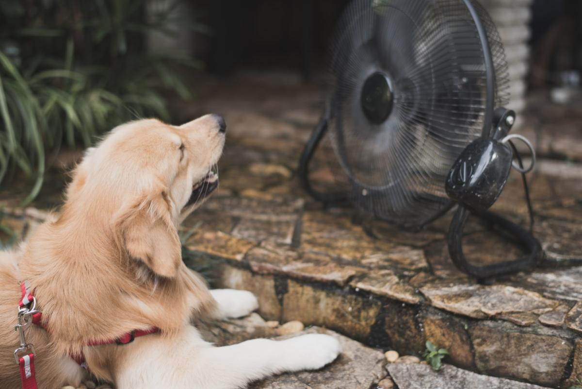 heat,, dogs, cats, heatwave, pets, protect