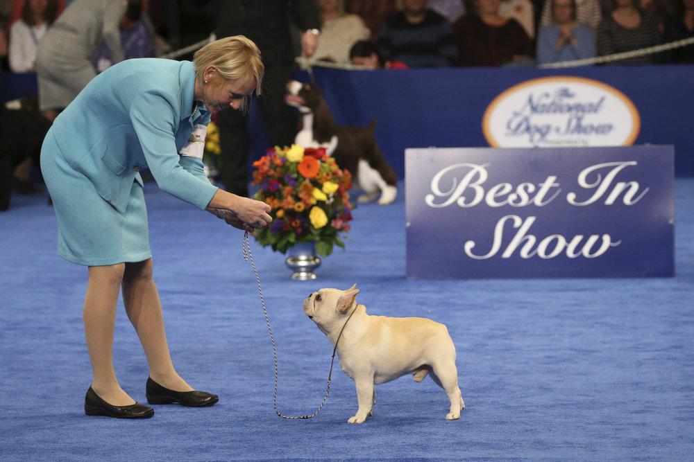 National Dog Show Brussels Griffon >> Chewbacca Twin Brussels Griffon Wins National Dog Show | LATF USA